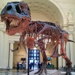 T-Rex - Chicago